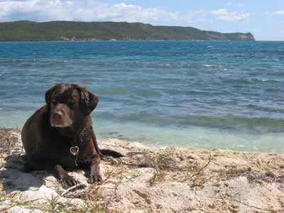 Antigua dogs - Abbey and Chilli McConnahie