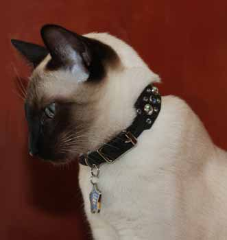 wide crystal fancy cat collars
