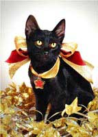 kitten bows Christmas greeting cards