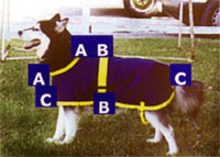 dog blanket measurements