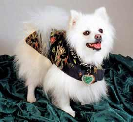 fancy designer dog clothing clothes coats jackets