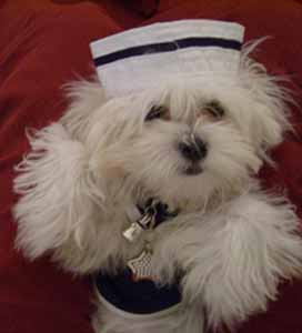 sailor suit dog photo