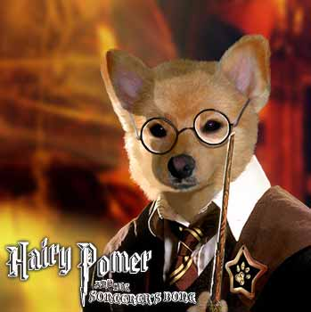 hairy pommer - Hairy Potter