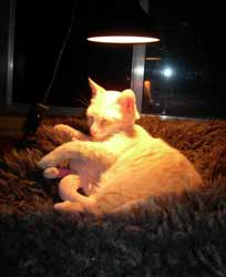 sunlamps for kitties