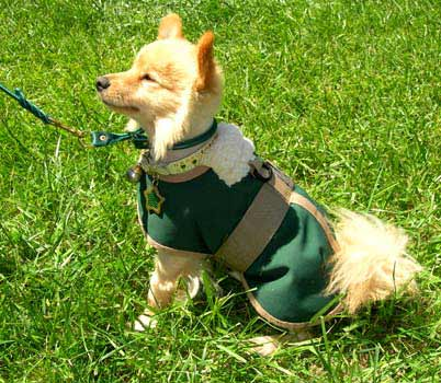 waterproof dog coats blankets
