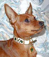 min pin fancy collars - Rocco