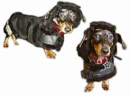 real shearling dog coats hats