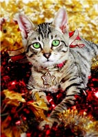 Cat kitten Christmas Holiday Greeting cards